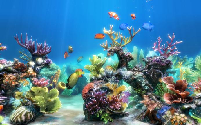 水族馆动态屏保下载 电脑水族馆动态屏保 动态水族馆屏保图片