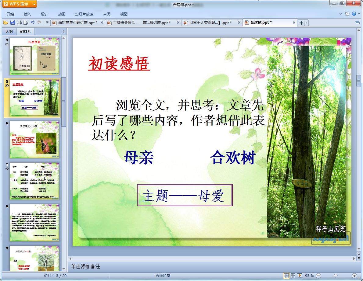 合欢树教学课件高株百日草图片
