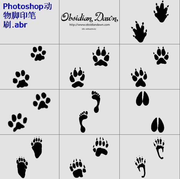 photoshop动物脚印笔刷包(共34款)abr格式免费版