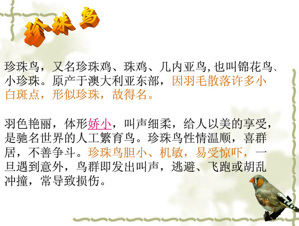珍珠鸟ppt免费下载|珍珠鸟ppt音乐苏教版免费下课件闪烁的小星教案图片