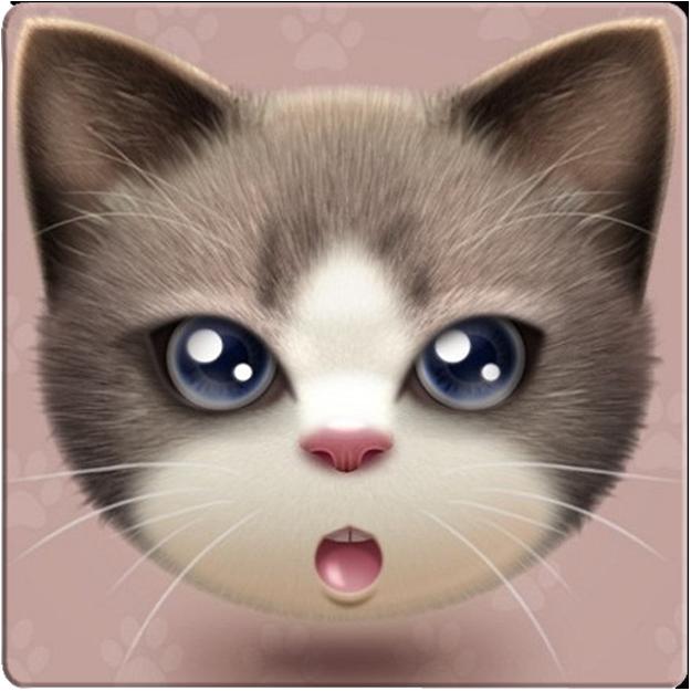 懒猫转发软件免费下载|安卓懒猫一键转发小视