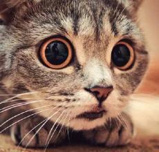 惊讶猫表情|惊讶猫qq图片1.0免费版表情表情2大话大全包图片